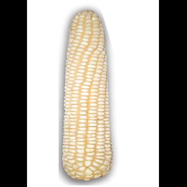 WH605 Maize Crop